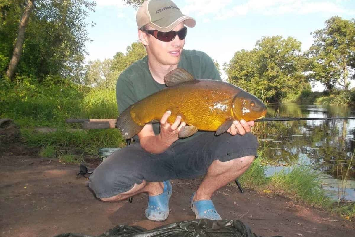 How Can You Tell If a Tench Is Male or Female