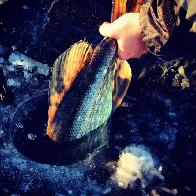 ice fishing for saltwater pike