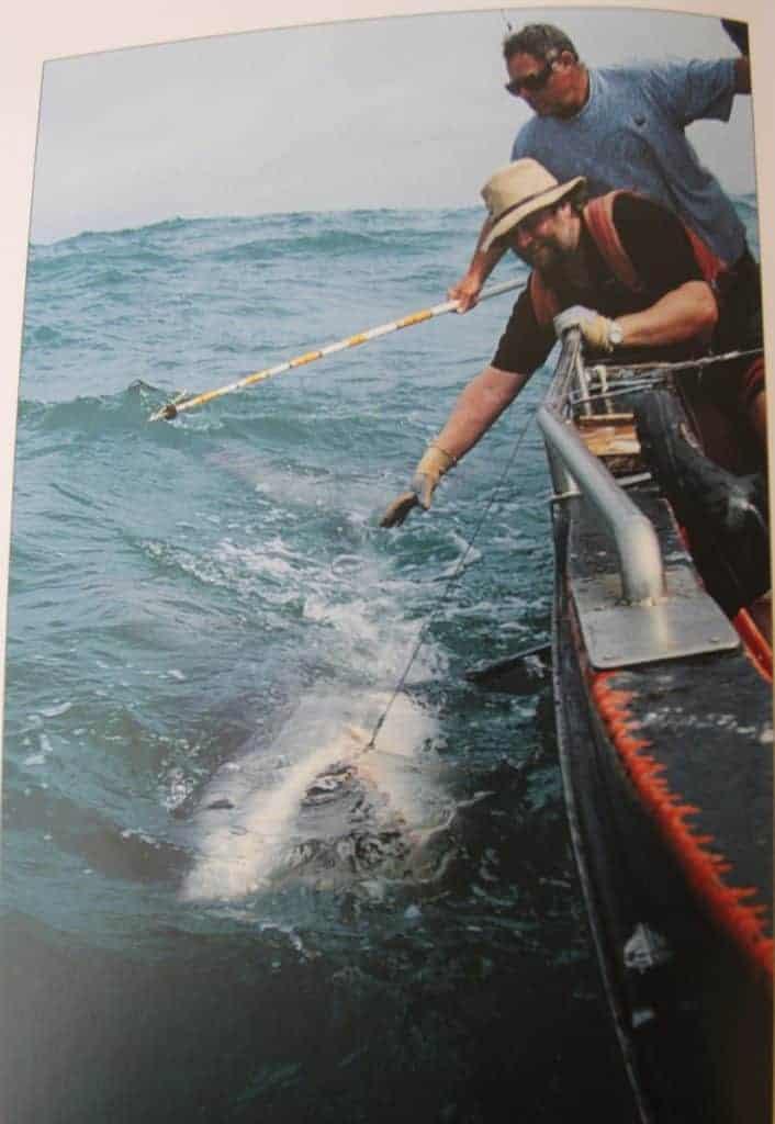 Des Taylor shark