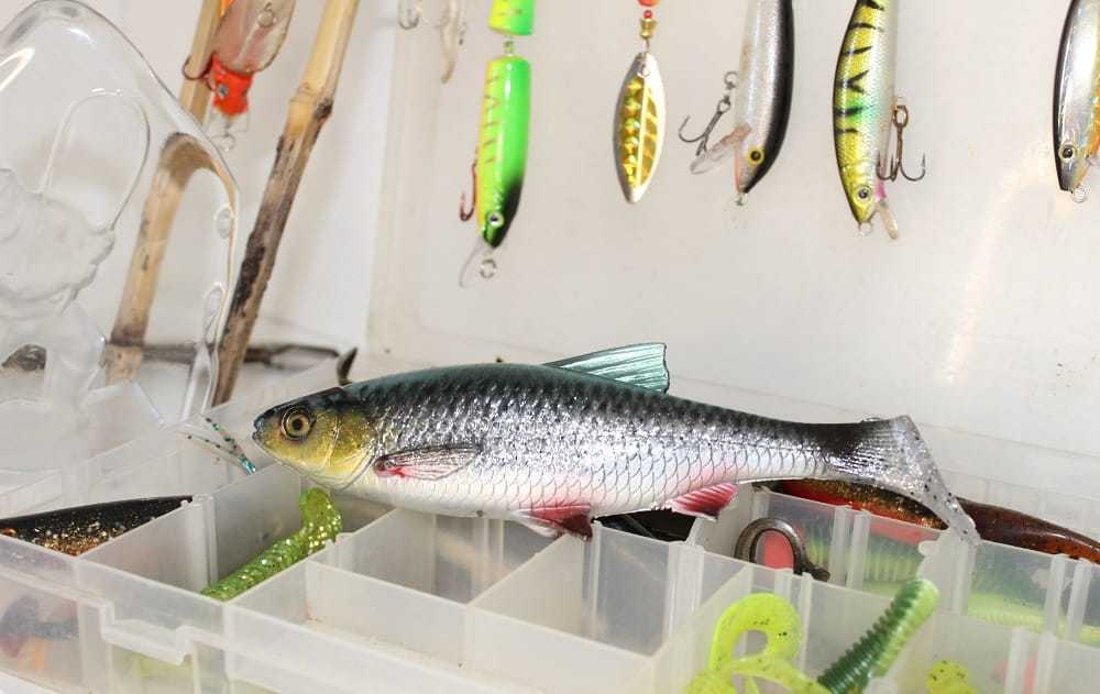 roach fishing lures