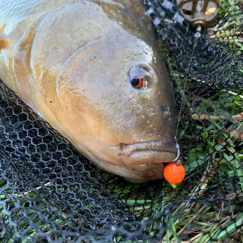 best boilie size for tench