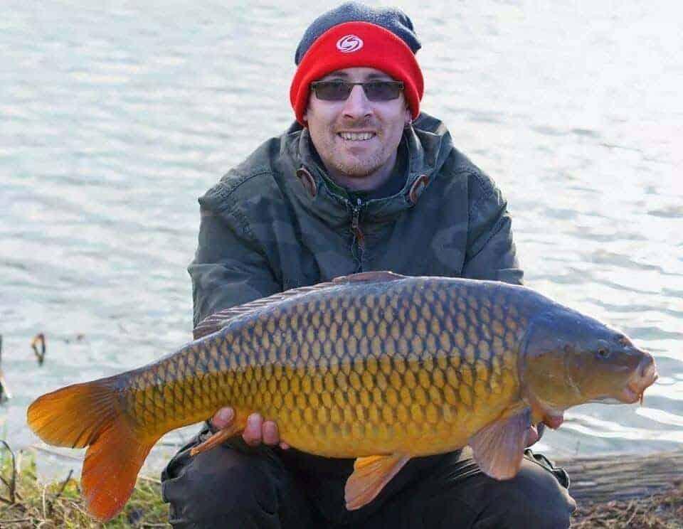 common carp average size