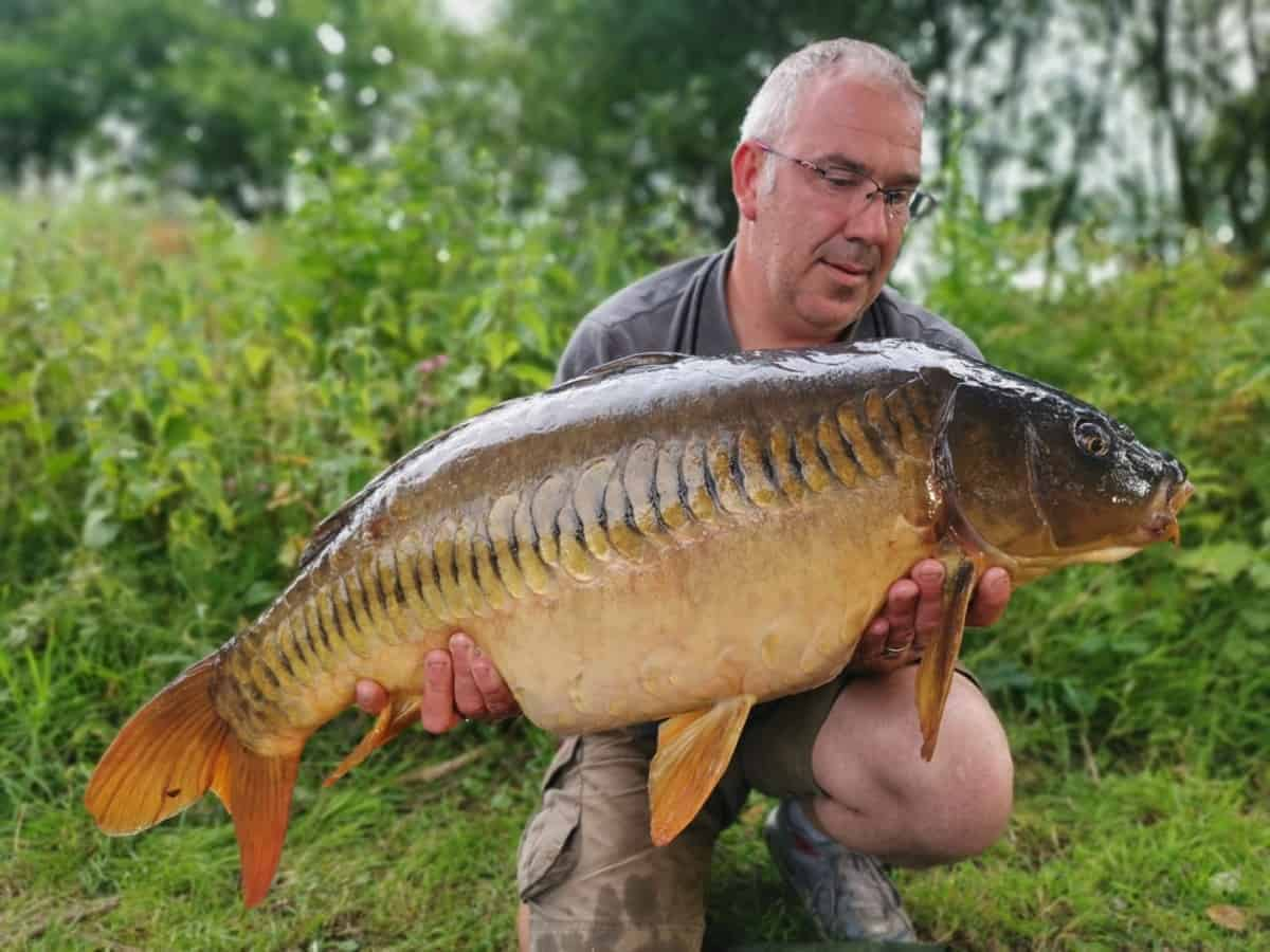 a carp fisherman holding a big and beautiful linear carp that he caught on the chod rig with a pop-up