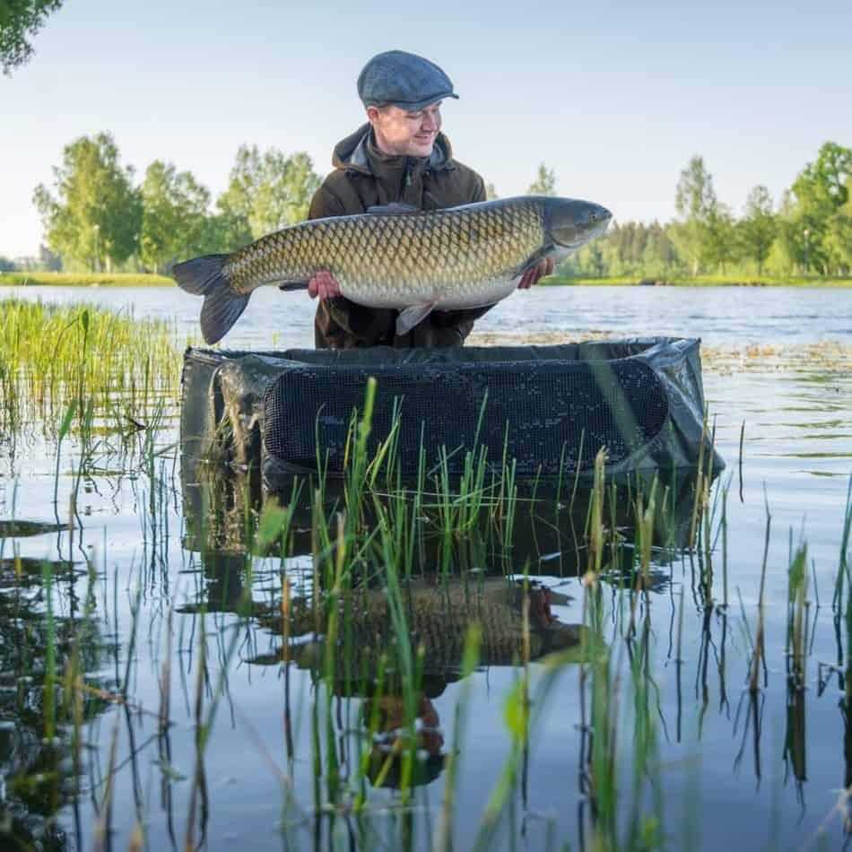 a fisherman on a lake holding a giant grass carp