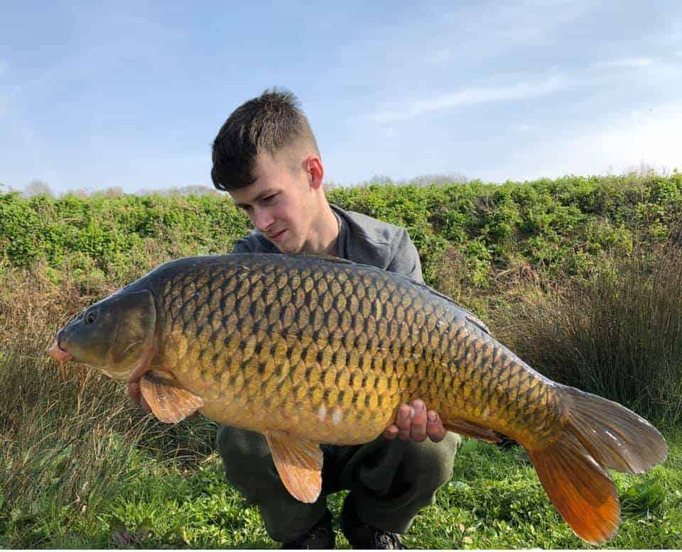 a fisherman holding a giant and fat English common carp