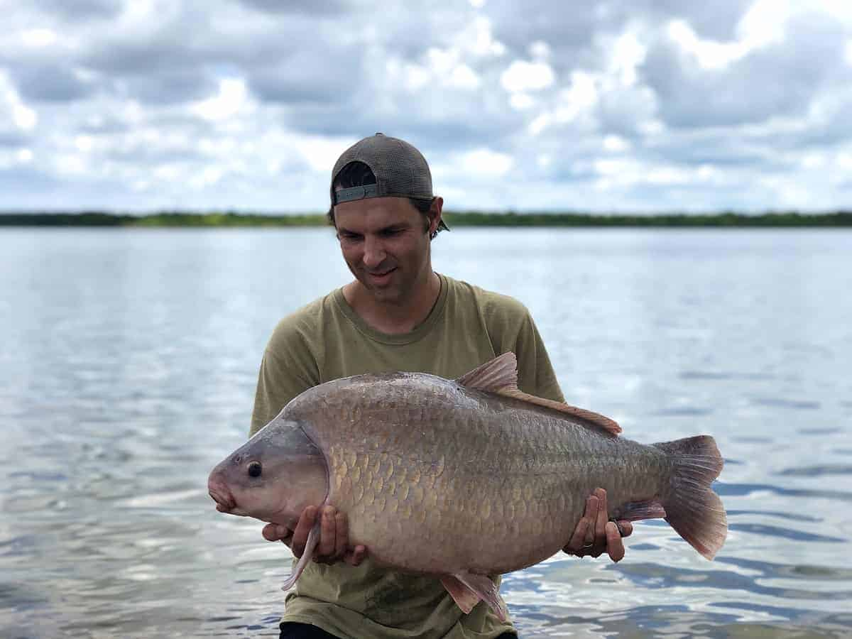 a North American angler holding a big fat buffalo fish while standing in the water