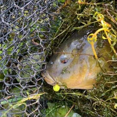 pop-ups for tench