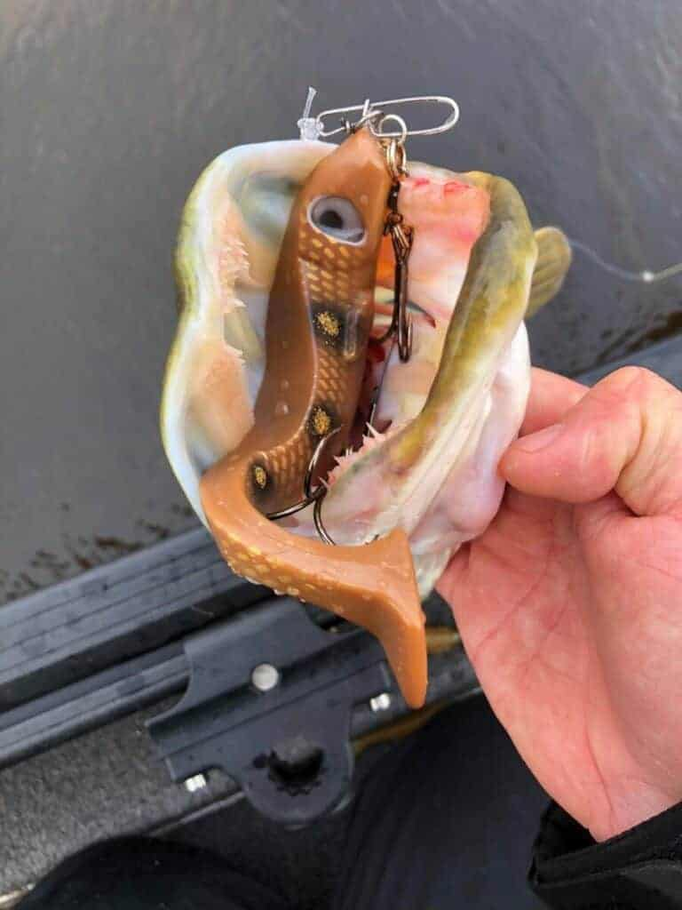When Can You Use a Fluorocarbon Leader for Pike