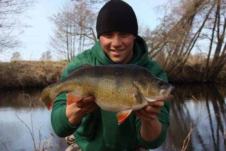 a specimen angler holding a giant and fat female perch full of eggs.