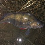 Perch Fishing at Night (Best Baits And Methods)