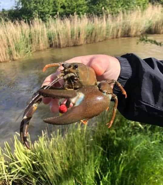 how to keep crayfish away from your bait