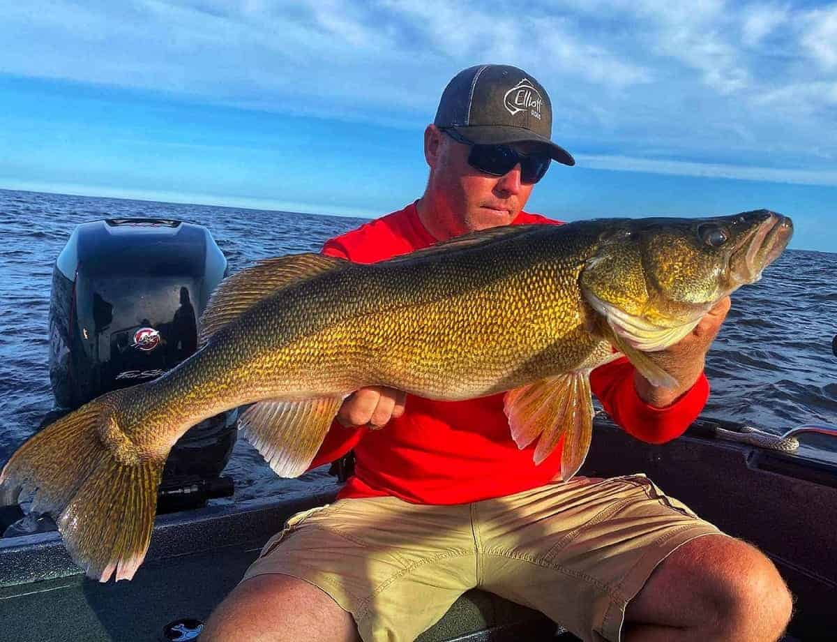 Why You Should Not Use a Steel Leader for Walleye