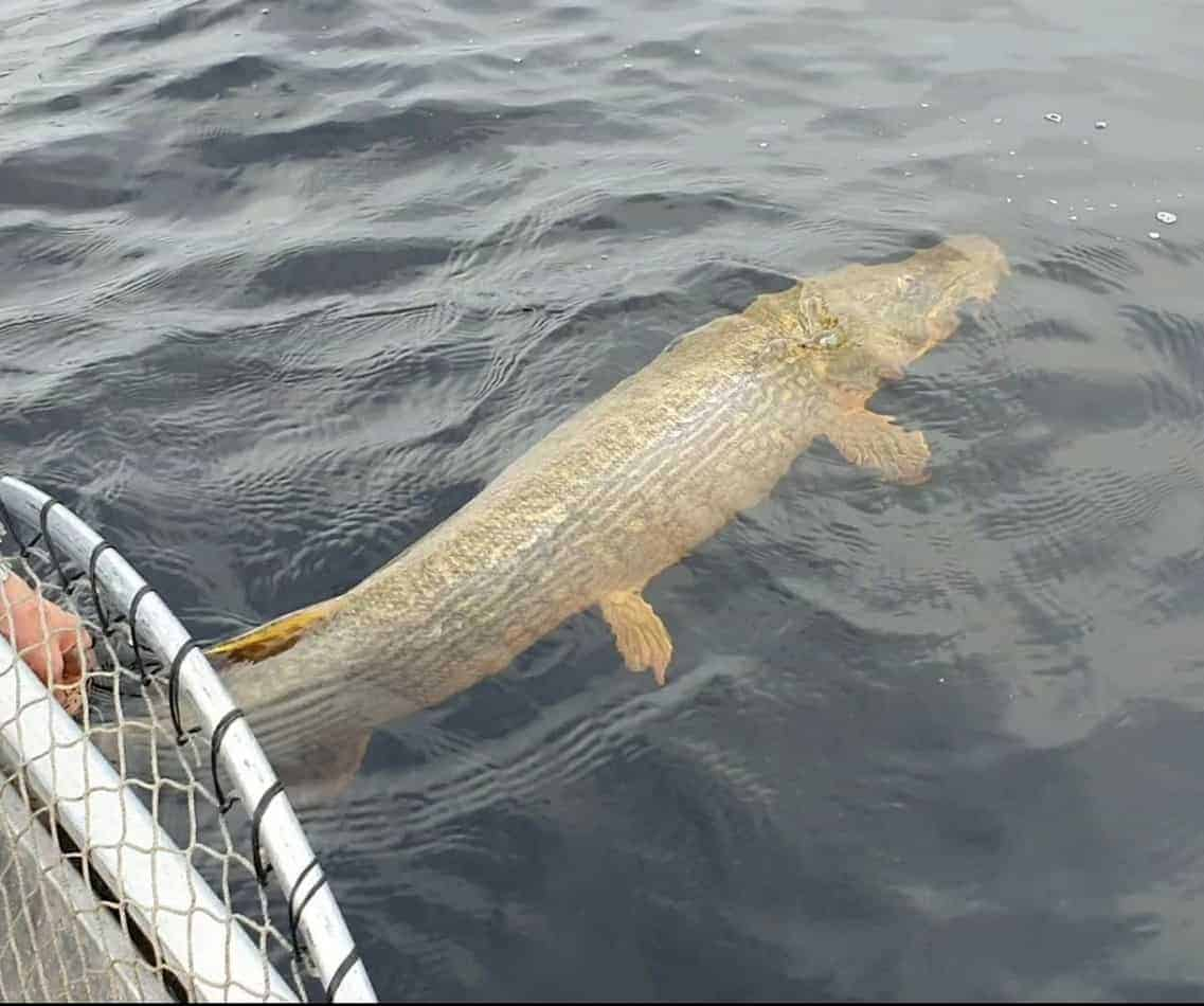 best time of year to catch pike