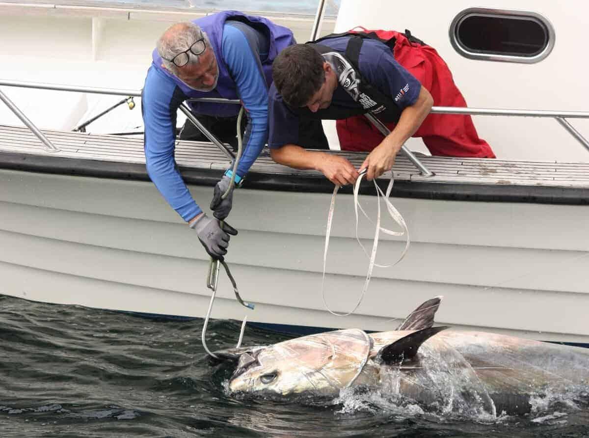 bluefin tuna in north sea