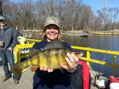 where can you find yellow perch