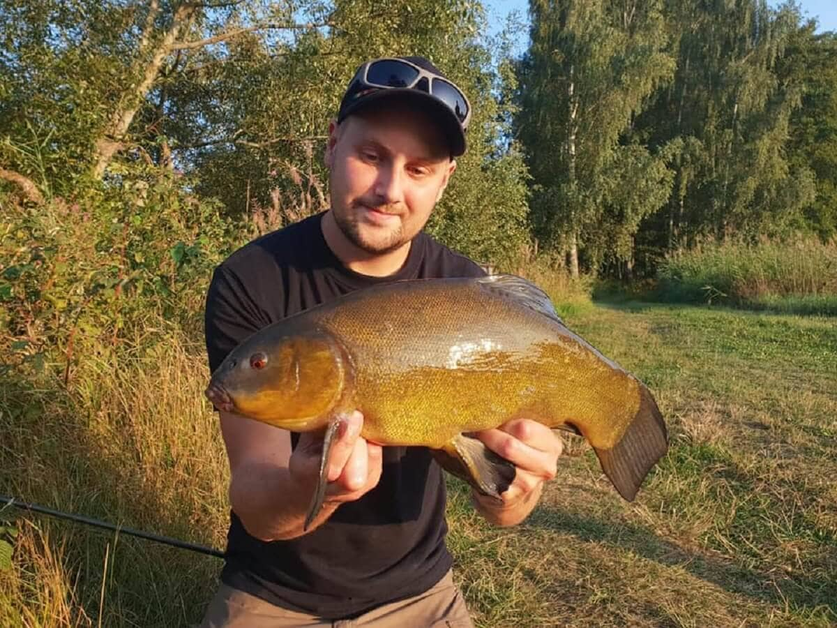 a happy angler holding a big tench that he has caught on the feeder rod using corn and maggots as bait