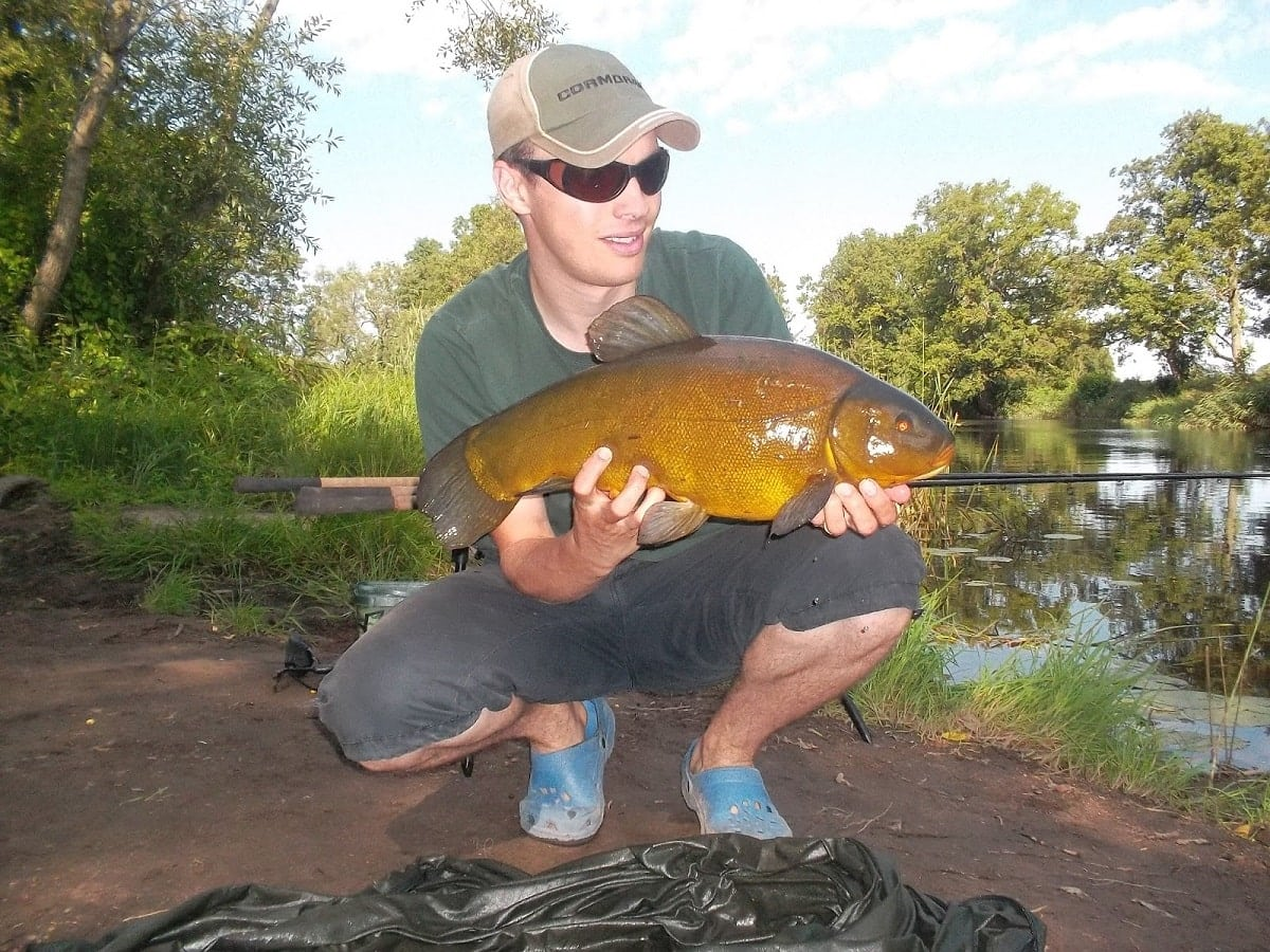 a coarse angler holding a giant tench in front of a rod pod and three rigged ledger rods on a river