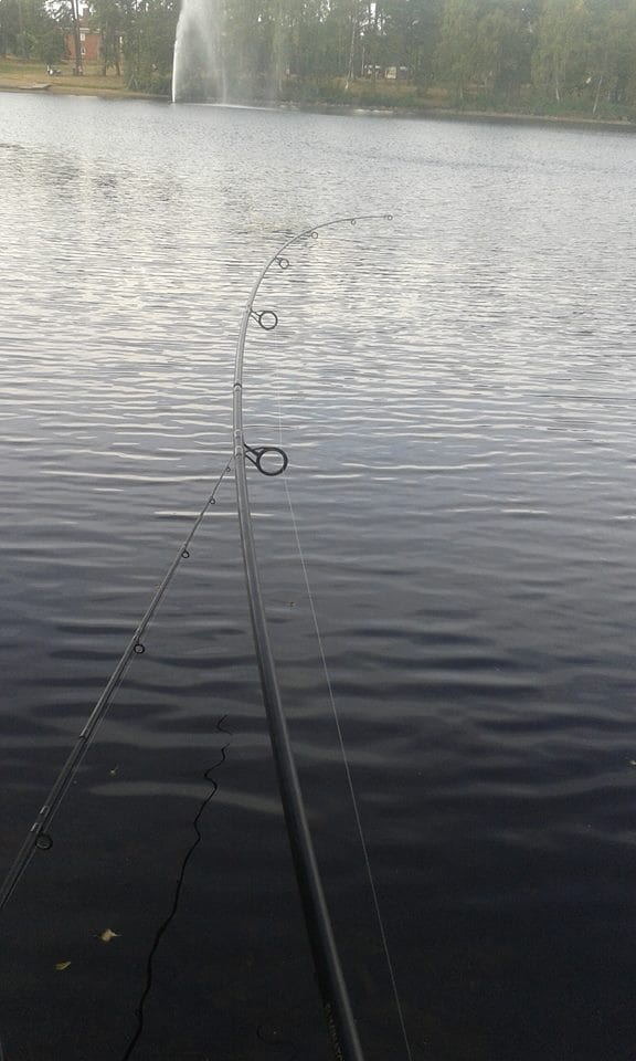 a euro carp rod with a 3lb test curve bending during a carp fight