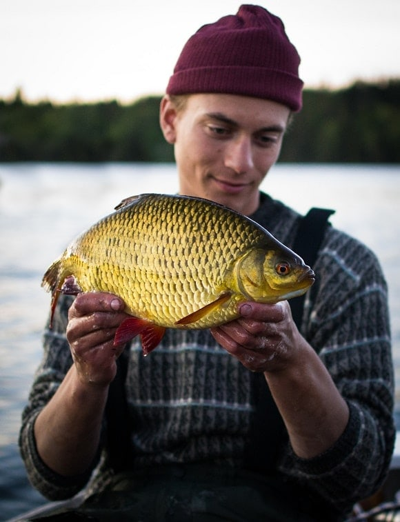 a happy angler holding a big and beautiful rudd of a golden colour that he has caught on a bread flake