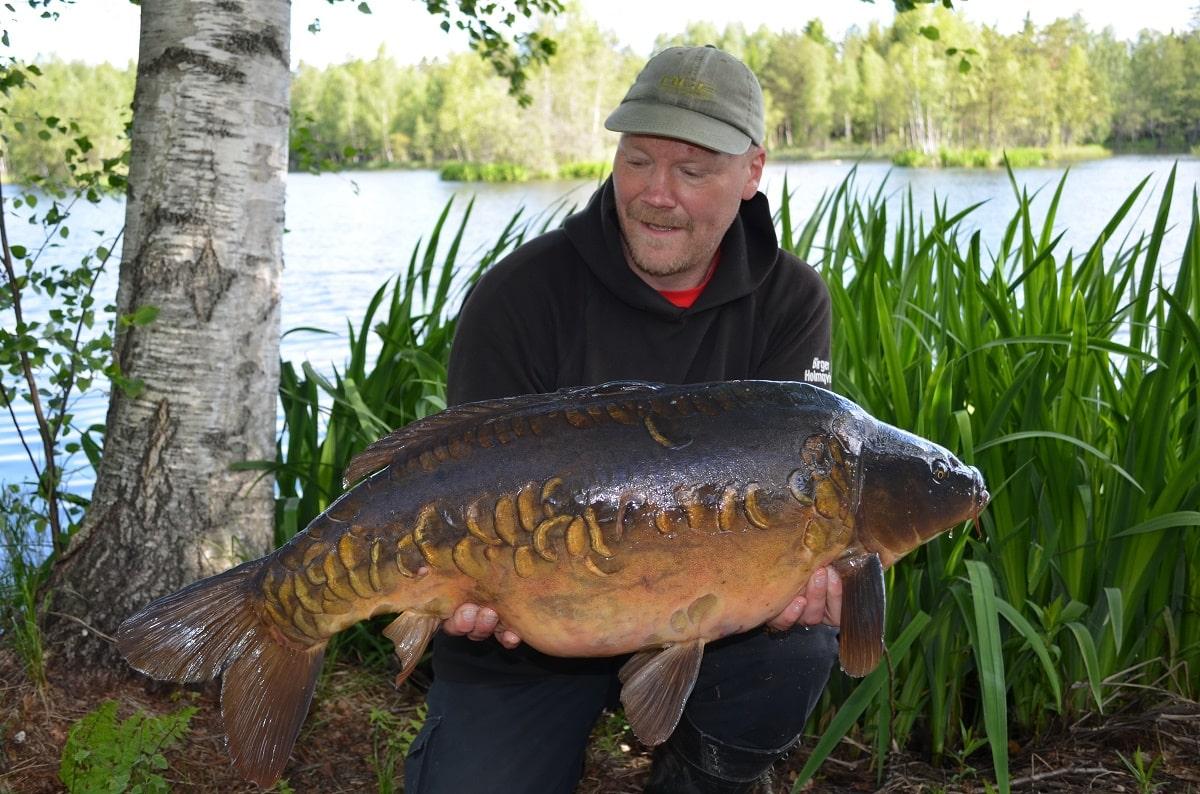 a Swedish carp angler at a lake holding a big mirror carp