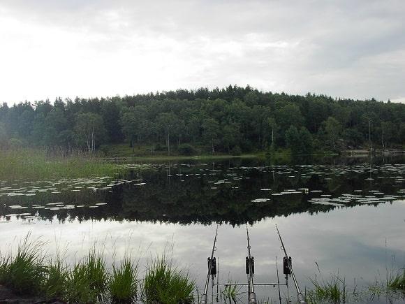 three rigged carp rods on a Swedish carp venue