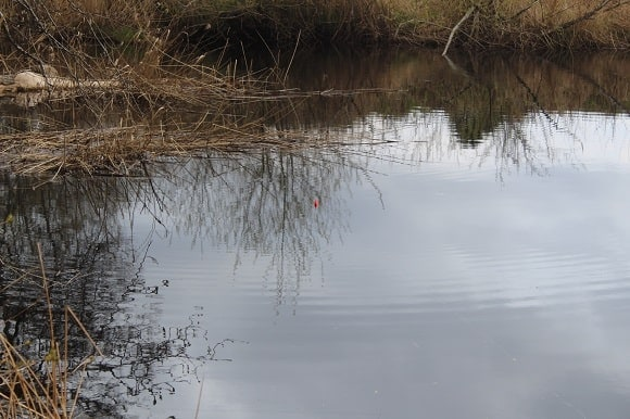 a red perch float rigged with a live baitfish in the water