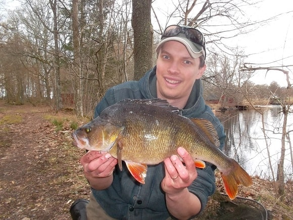 a fisherman holding a giant and fat perch that he has caught on a small live bait in a river