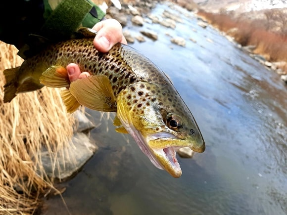 a fisherman holding a small trout on a river