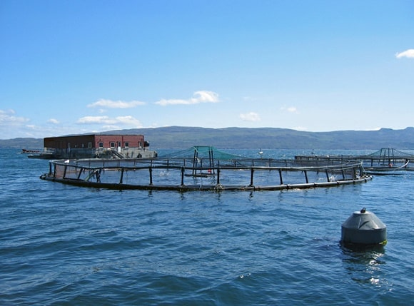 a picture of a Norwegian Atlantic salmon farm in the ocean