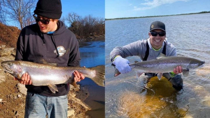 Steelhead vs. Salmon (How Are They Different?)