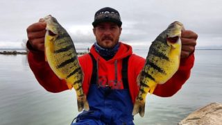 a fisherman on a lake holding two fat yellow perch